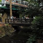 井の頭公園内を駆け抜ける京王井の頭線