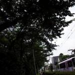 【Tokyo Train Story】生い茂った木々の下、都電が走る