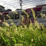 【Tokyo Train Story】ネコジャラシと都電荒川線