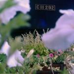 【Tokyo Train Story】新橋SL広場のC11