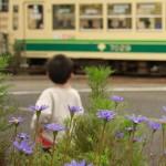 【Tokyo Train Story】都電はいつでも子供たちにとって憧れの的