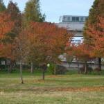 【Tokyo Train Story】舎人公園の紅葉風景