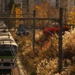 【Tokyo Train Story】逆光に輝く秋と冬の狭間の風景