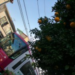 【Tokyo Train Story】みかんの木と都電荒川線