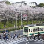 【Tokyo Train Story】飛鳥山公園の花見客が通るのを待つ都電荒川線