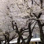 【Tokyo Train Story】貨物駅にも春が来た