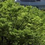 【Tokyo Train Story】新緑のゆりかもめ