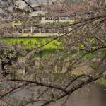 【Tokyo Train Story】神田川の桜と都電荒川線