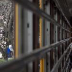 【Tokyo Train Story】飛鳥山公園のお花見電車