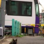 【Tokyo Train Story】踏切前の猫