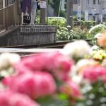 【Tokyo Train Story】バラ咲く停留所