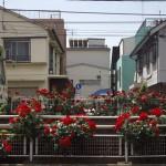 【Tokyo Train Story】妖艶な赤いバラ