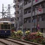 【Tokyo Train Story】都電バラ回廊