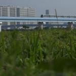 【Tokyo Train Story】未開発の荒地を行くゆりかもめ