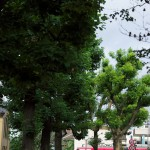 【Tokyo Train Story】世田谷線沿いの遊歩道