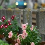 【Tokyo Train Story】線路脇の鉢植え