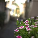 【Tokyo Train Story】朝の路地裏風景(都電荒川線)