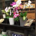 【Tokyo Train Story】路地裏のサボ