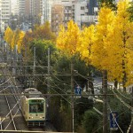 【Tokyo Train Story】黄葉トンネル(都電荒川線)