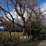 【Tokyo Train Story】冬枯れの道(京王井の頭線)