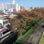 【Tokyo Train Story】桜の紅葉(都電荒川線)