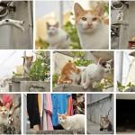 2013年11月22日(金)~27日(水) 千駄木にある谷根千・ぎゃらりーKnulpで開催される写真展「ねこ展」でとくとみのネコ写真が展示されます!