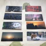 写真展「東京シャッターガール2」での会場で配布するために自分で撮影した写真を裏面デザインに用いることができるpocketer(ポケッター)で名刺を作ってもらった