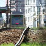 【Tokyo Train Story】線路敷の緑(都電荒川線)