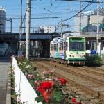 【Tokyo Train Story】バラ咲く路線 都電荒川線