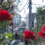 【Tokyo Train Story】赤いバラの向こうに(都電荒川線)