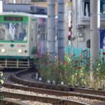 【Tokyo Train Story】目の前に広がるバラの群れ(都電荒川線)