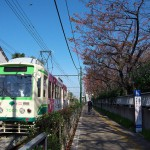 【Tokyo Train Story】秋の桜(都電荒川線)