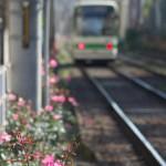 【Tokyo Train Story】ピンクのバラを眺めながら(都電荒川線)