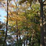 今週の365 DAYS OF TOKYO(12月9日~12月15日) ~ 世田谷と上野の秋景色