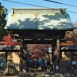 世田谷区にある豪徳寺境内の紅葉の美しさ 豪徳寺の紅葉散歩 その1