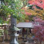 豊かな自然に囲まれた豪徳寺の秋景色 豪徳寺の紅葉散歩 その3(最終回)