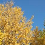 上野公園のイチョウを始めとする秋景色 秋の谷中フォトウォーク2013 その1