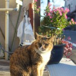 次から次へと現れる谷中のネコたちをたっぷりと撮影する 秋の谷中フォトウォーク2013 その4