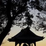 今週の365 DAYS OF TOKYO(12月23日~12月29日) ~ 秋の景色から冬の景色へ