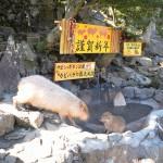 お正月には午後にもカピバラのお風呂タイムがありました! 冬の青春18きっぷの旅伊豆シャボテン公園編 その10