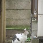 路地裏ネコの生態観察日記