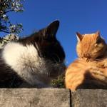 olloclipの魚眼レンズをiPhone5sにつけてのネコ撮影が楽しい一人谷中フォトウォークに行ってきた!