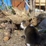 Nikonの50mm単焦点レンズはネコとの距離感がちょうどいいネコ撮影にぴったりのレンズだった!