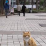 今週の365 DAYS OF TOKYO(3月24日~3月30日) ~ 上野公園、春近し