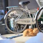 雪の中で日向ぼっこをするネコと松代温泉の黄金色の湯 冬の岐阜長野温泉巡りの旅 その28(最終回)