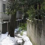 東京雪景色2014 台東区池之端と文京区根津の路地裏にある井戸ポンプ4つの雪景色 その4