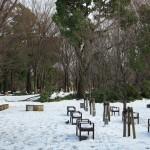 東京雪景色2014 上野公園の雪景色と雪の中のネコたち(動画あり) その5