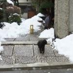 東京雪景色2014 雪の中でも外で歩きまわる谷中のネコと井戸ポンプがある風景 その3