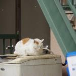 PENTAX K-3を使って一日で谷根千周辺のネコを20匹撮影したので一気に紹介します!
