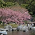 10頭の赤ちゃんカピバラが生まれた河津桜が咲く伊豆アニマルキングダムへ! 春の伊豆旅行2014 その2